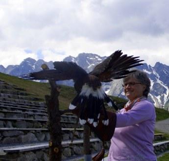 """""""Adlerzähmung"""" im Zillertal 2015"""
