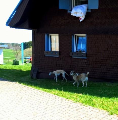 django in eisenbach 02